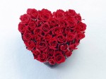 red-rose-heart